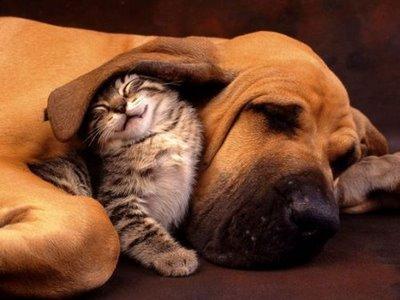 hund_och_katt_88569180