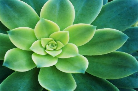 Succulent-Echeveria-Painting_wallpaper-650x433