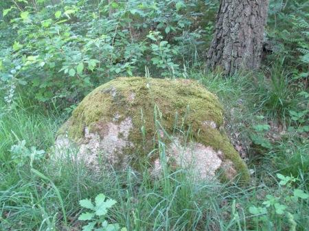 Skogsbacken 003