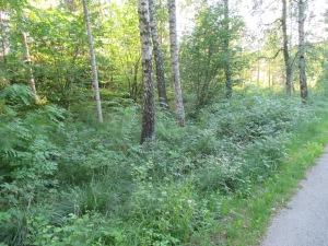 Skogsbacken 004