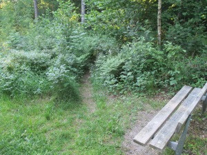 Skogsbacken 006