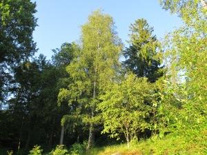 Skogsbacken 011