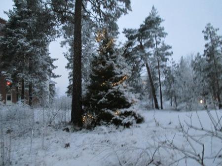 Första snön 001