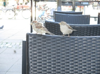 Fåglar 002